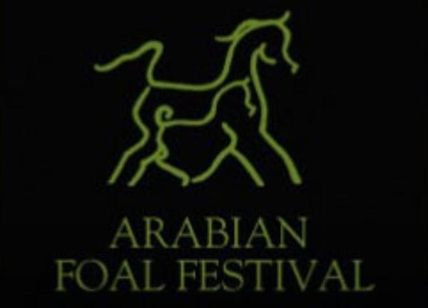 The Arabian Foal Festival