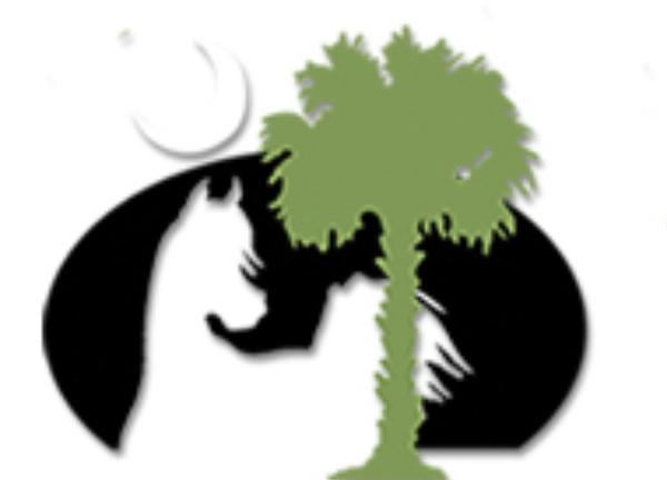 Palmetto Arabians - Scottsdale Stallion Presentation