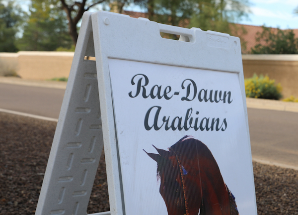 Rae Dawn Arabians - Open Day